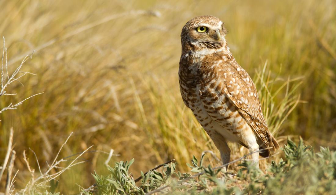 Endangered Species & Biodiversity