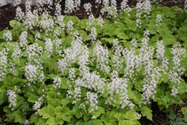 faomflower-header