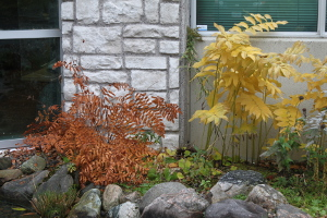 fall colour - sarah - 300px