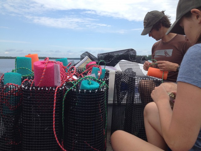 David Browne, Director of Conservation and Breanna Hallihan, summer field biologist, preparing our eel pots for deployment down near Arnprior.  Each trap was baited in hopes to attract eels.