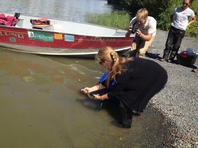 Naomi Langlois-Anderson releases an eel that was caught into the South Nation river after their field crew took morphometric data.