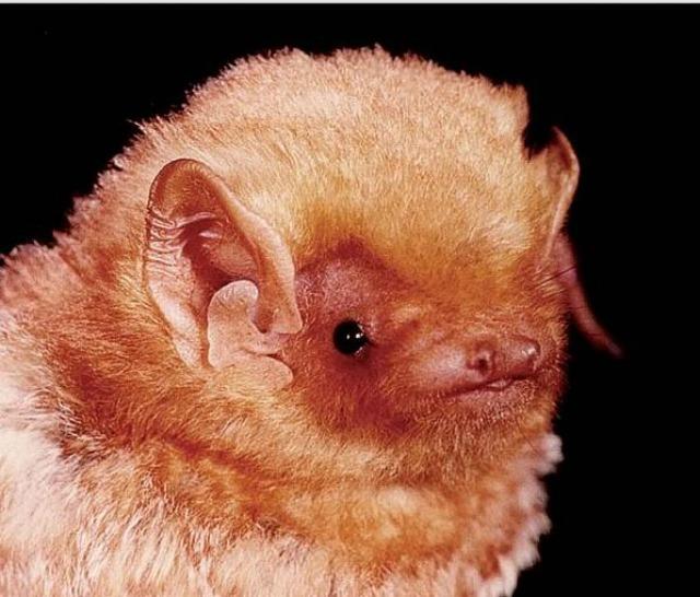 bat canada 1