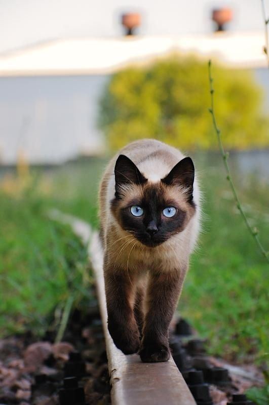 How To Keep Outdoor Cats From Killing Birds