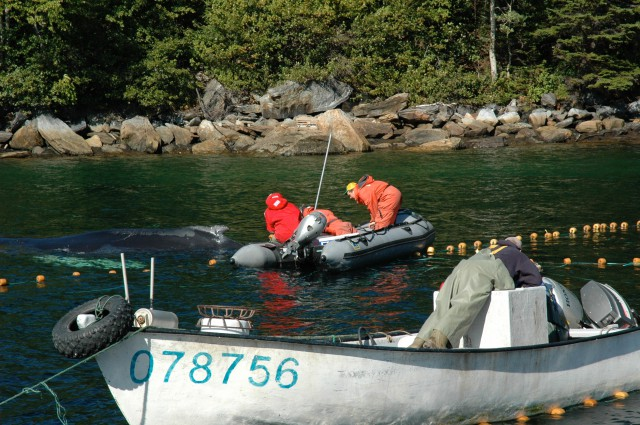 Whale Release and Strandings Group from Newfoundland and Labrador 2
