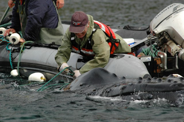 Whale Release and Strandings Group from Newfoundland and Labrador