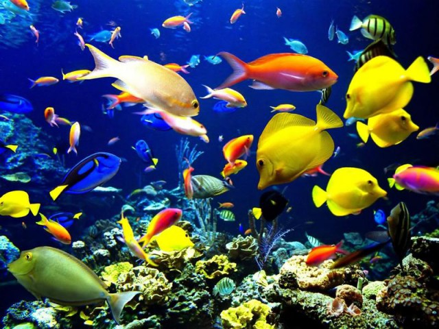 Diversity of fish at a coral reef (Photo)