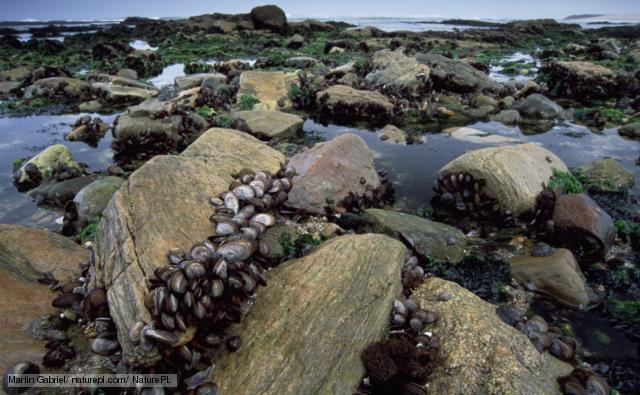 An intertidal zone located on the Atlantic coast of Africa (PHOTO)