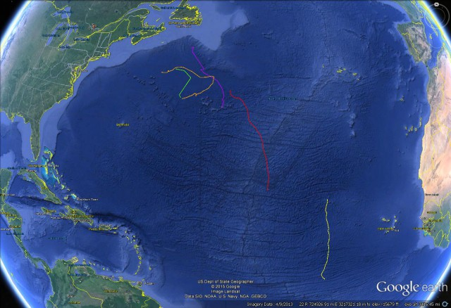 Positions of our leatherback turtle racers at the end of Week 5.