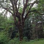 cedar river protected area