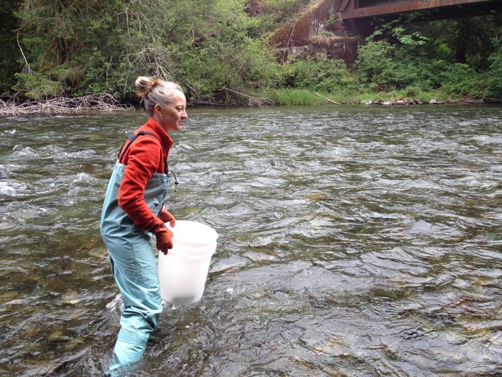 dr. jen mcintyre wading in cedar river