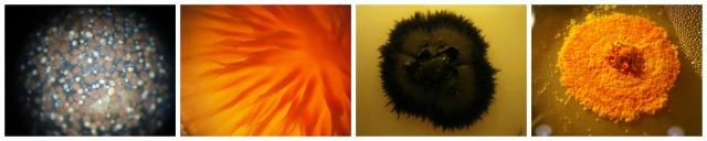PicMonkey Collage1_resized