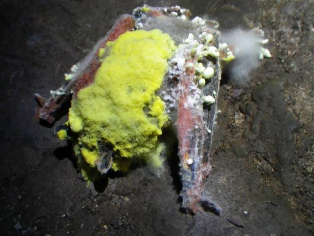 fungi on bat
