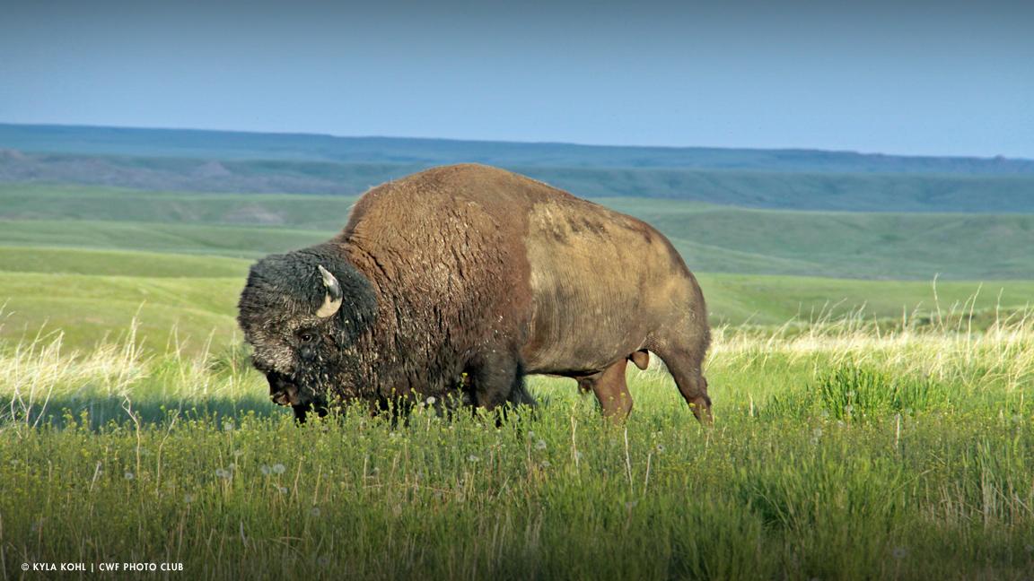 Grasslands-National-Park