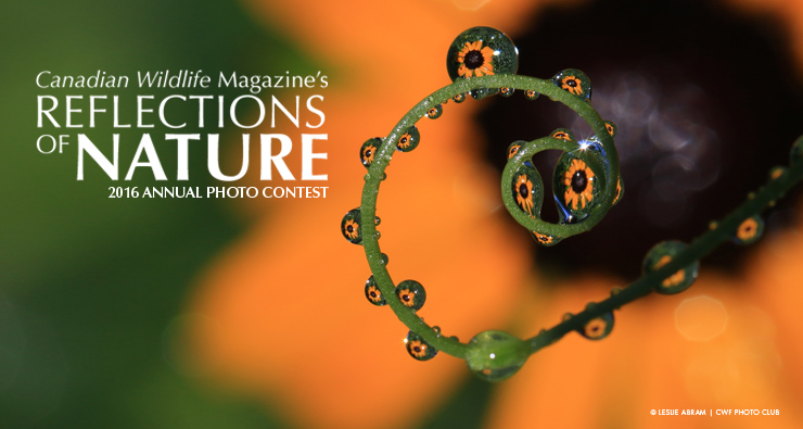 Reflections of Nature Photo Contest