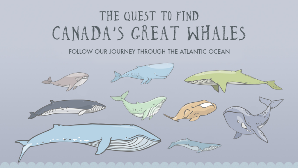 Quest to Find Canada's Great Whales