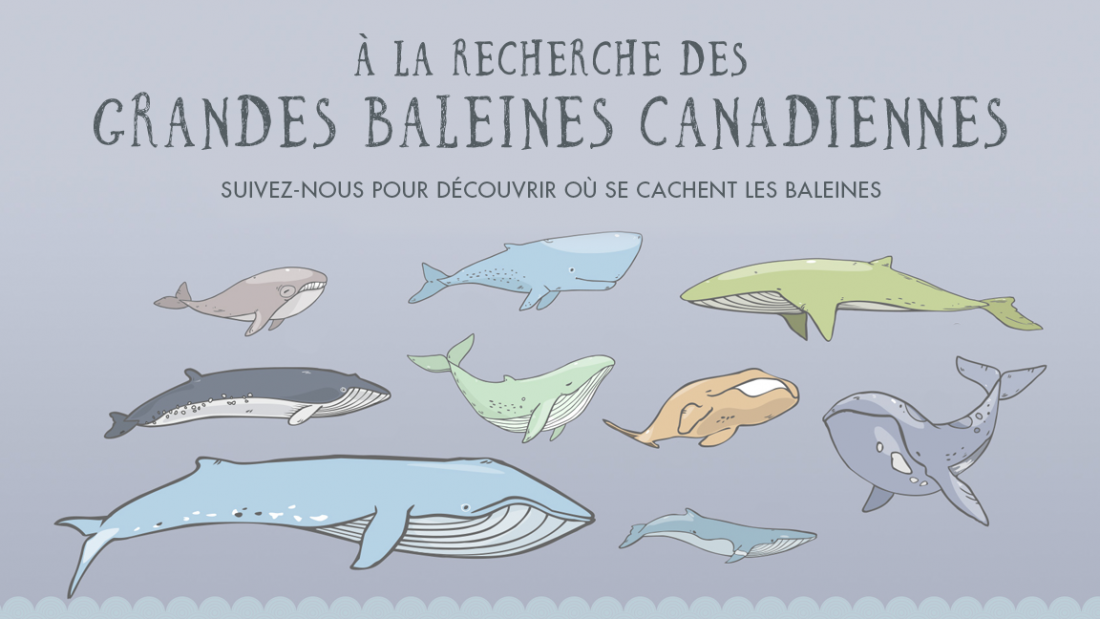 sm-share_whales_fr