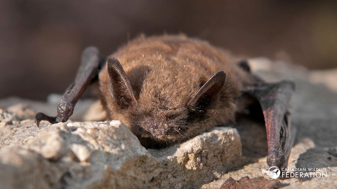 12-bats