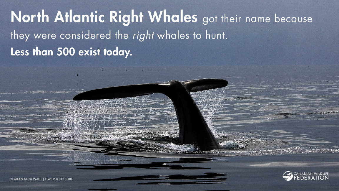 right-whales