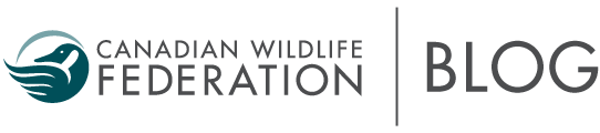 Your Connection to Wildlife