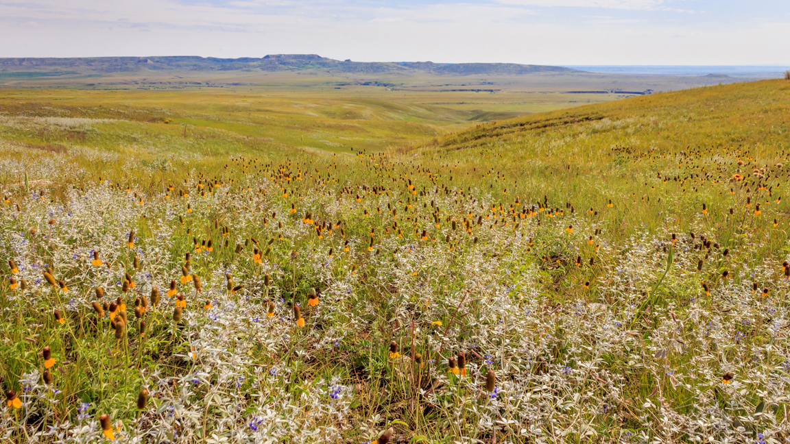 We could lose 2.3 million acres of prairie habitat if we don't act now