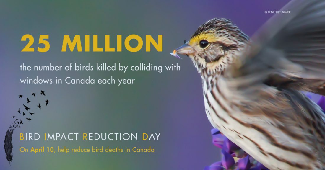 Bird Impact Reduction Day