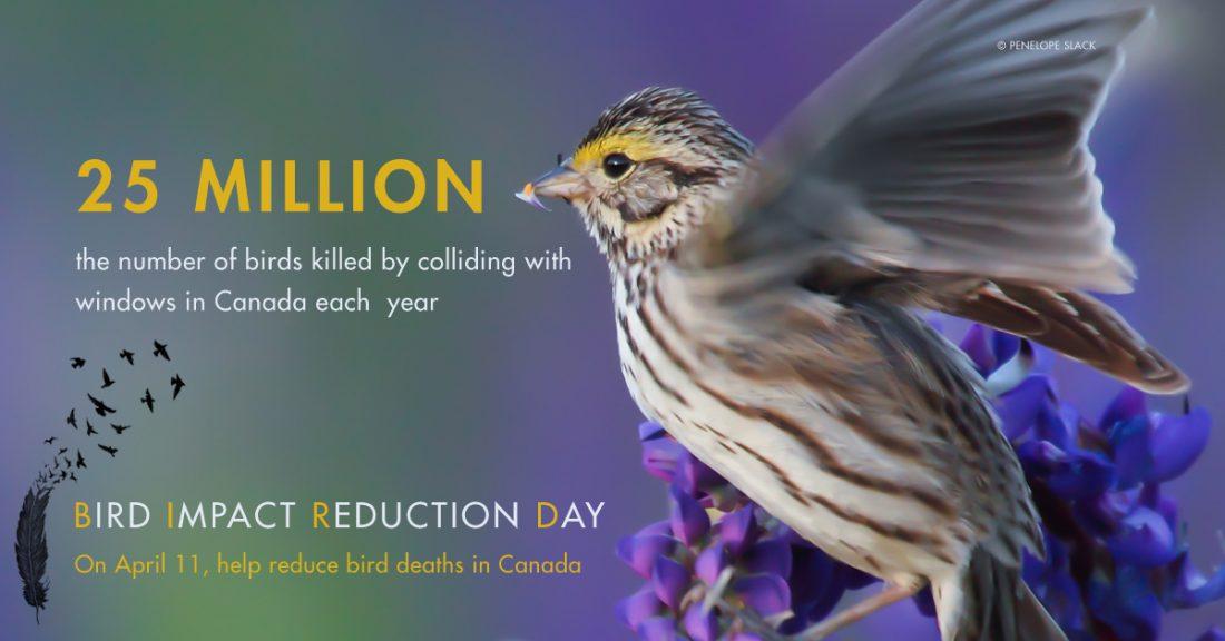 Bird Impact Reduction Day