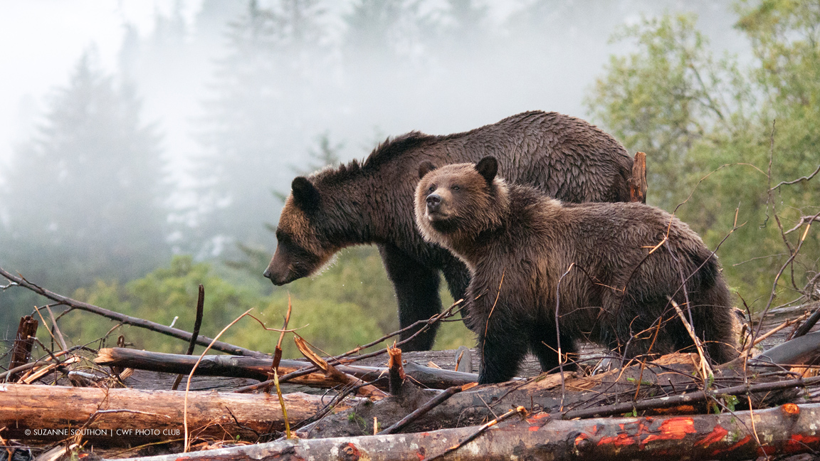 Step up to the challenge for National Wildlife Week