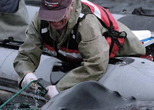 Canadian Marine Animal Response Alliance