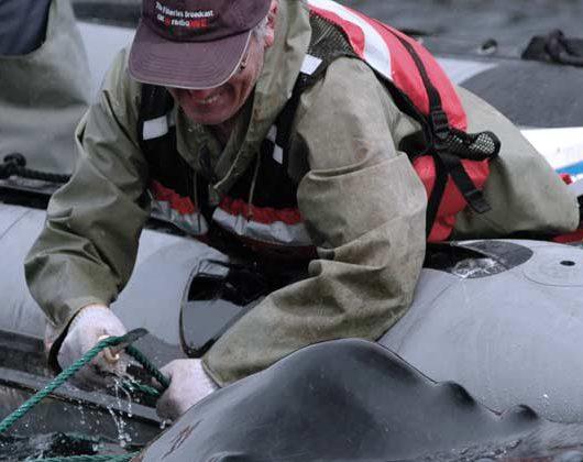 Canadian Marine Animal Response Alliance