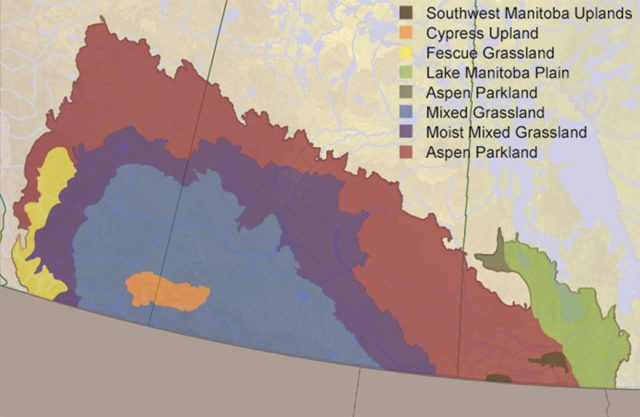 The Prairie Ecozone, showing location of Mixed Grass Prairie, where the majority of native grasslands remain in Canada. Source: Canadian Biodiversity Ecosystem Status and Trends 2010.
