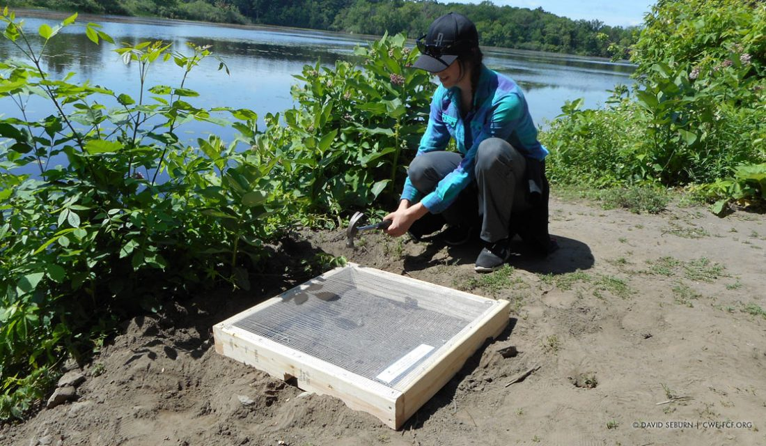 Brittany Quesnel, a member of the Canadian Wildlife Federation's turtle conservation team, installs a nest cage near the Ottawa River. © David Seburn