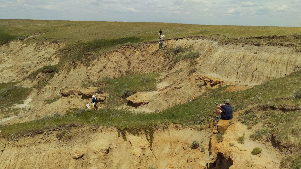 Three Days in the Life of a Native Prairie Insect Diversity Field Technician