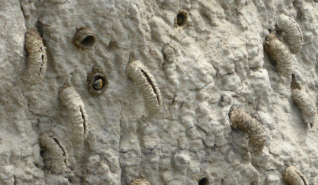Nesting Wasps