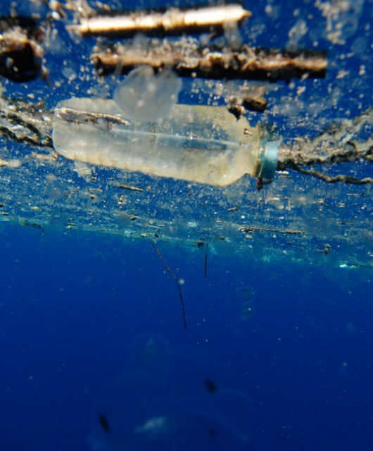 © Plastic Oceans Foundation