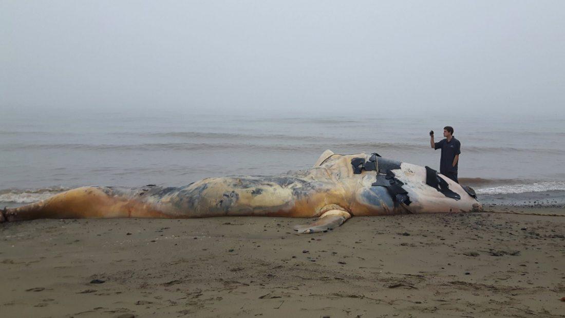 © Marine Animal Response Society