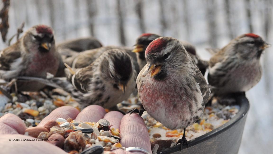 Prendre soin des oiseaux sauvages en hiver
