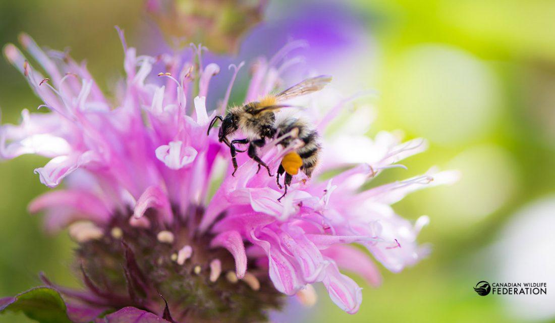 Bee and Bergamot