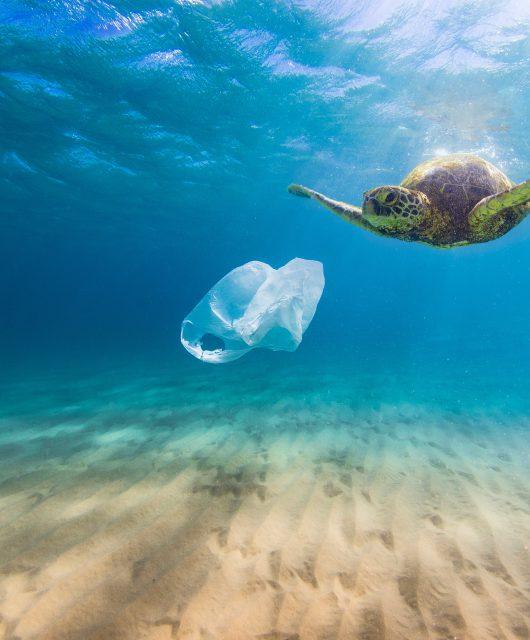 Plastic bag pollution in ocean