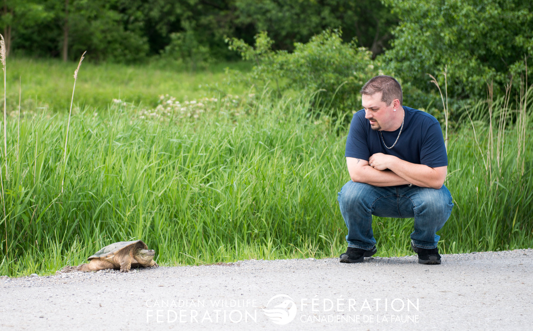 move a turtle across the road