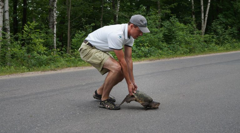 moving a turtle across the road