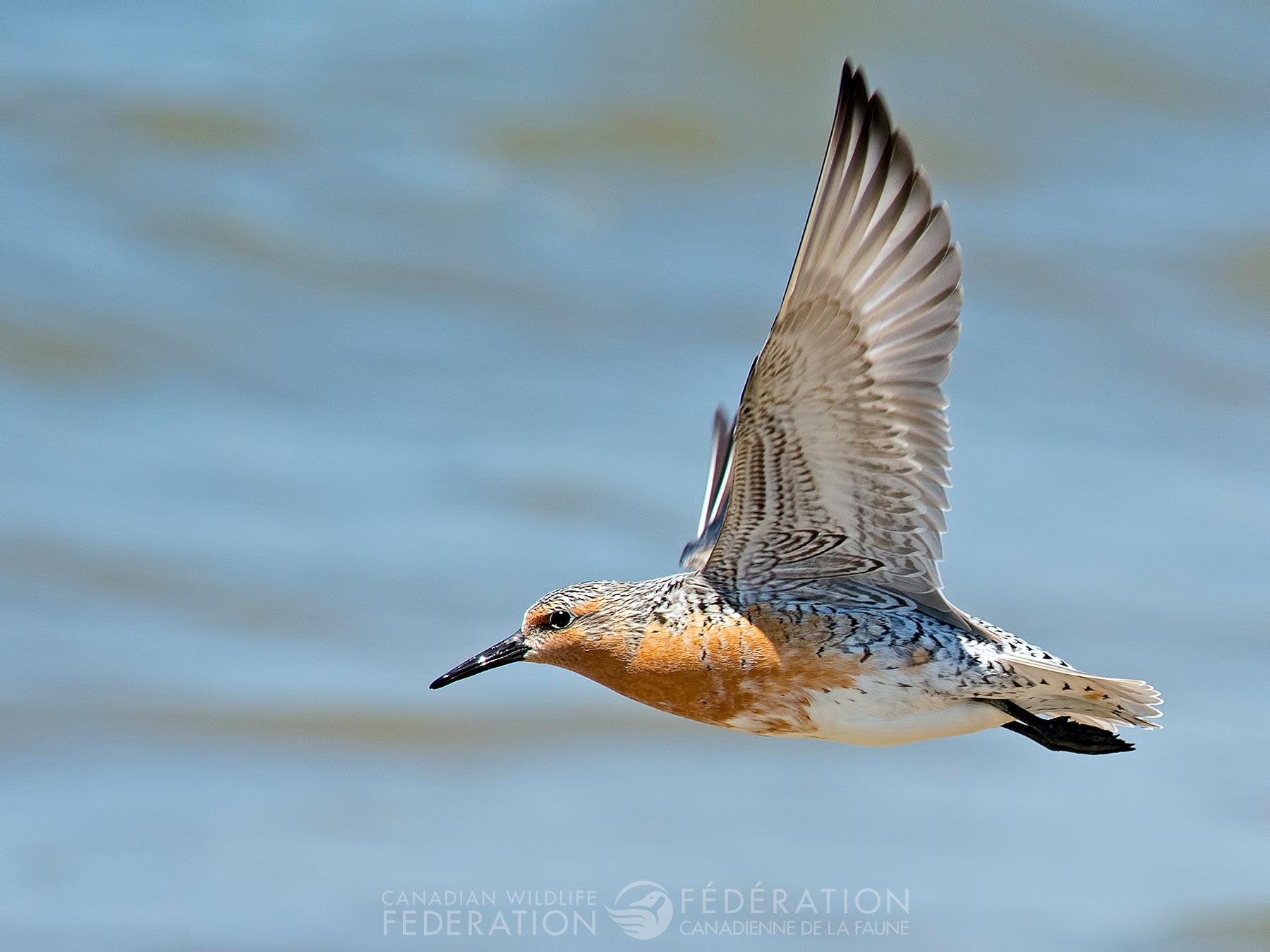 Bonne Journée Internationale des oiseaux migrateurs