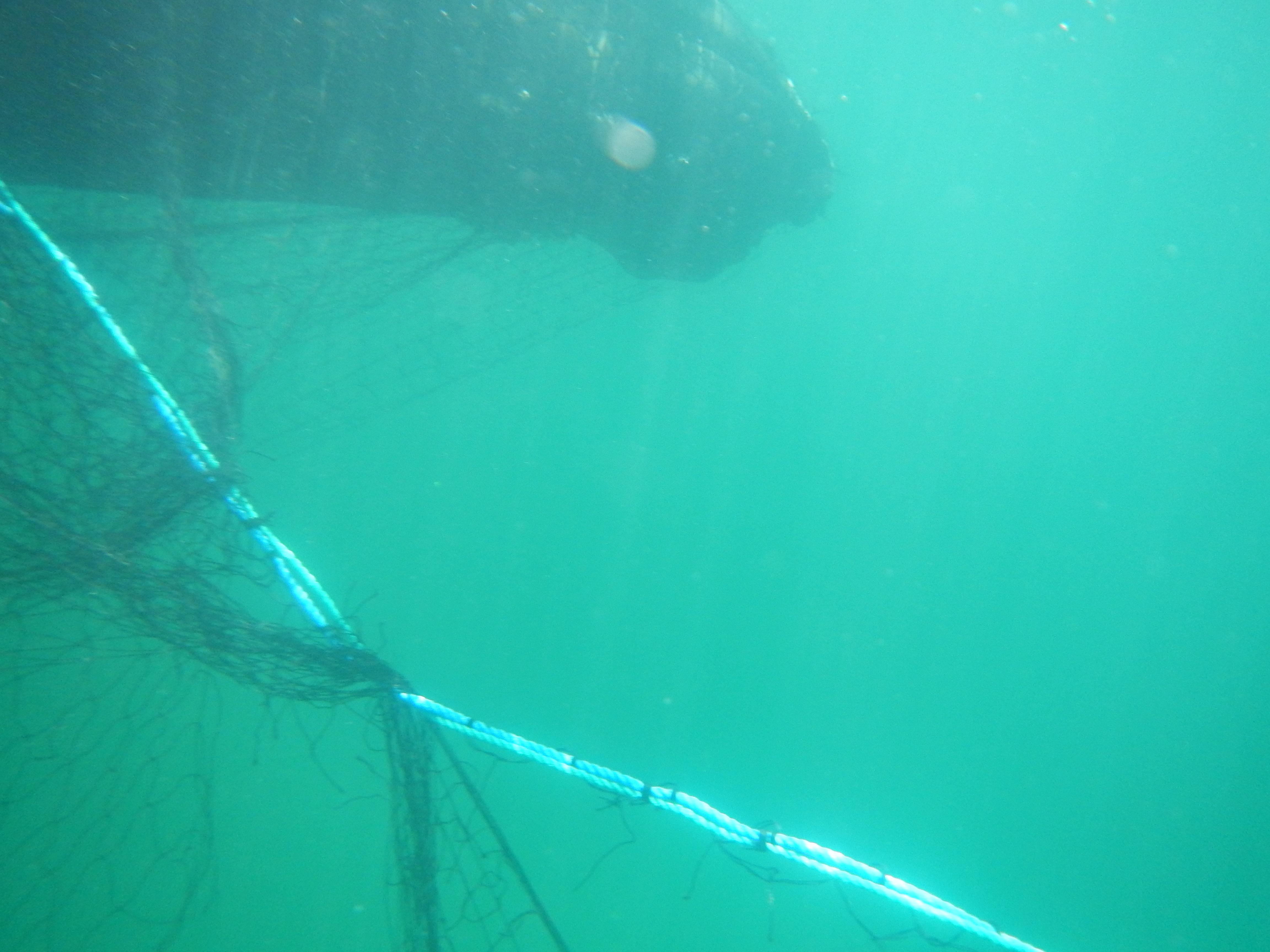 netting on head