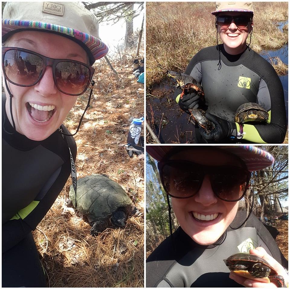 finding turtles