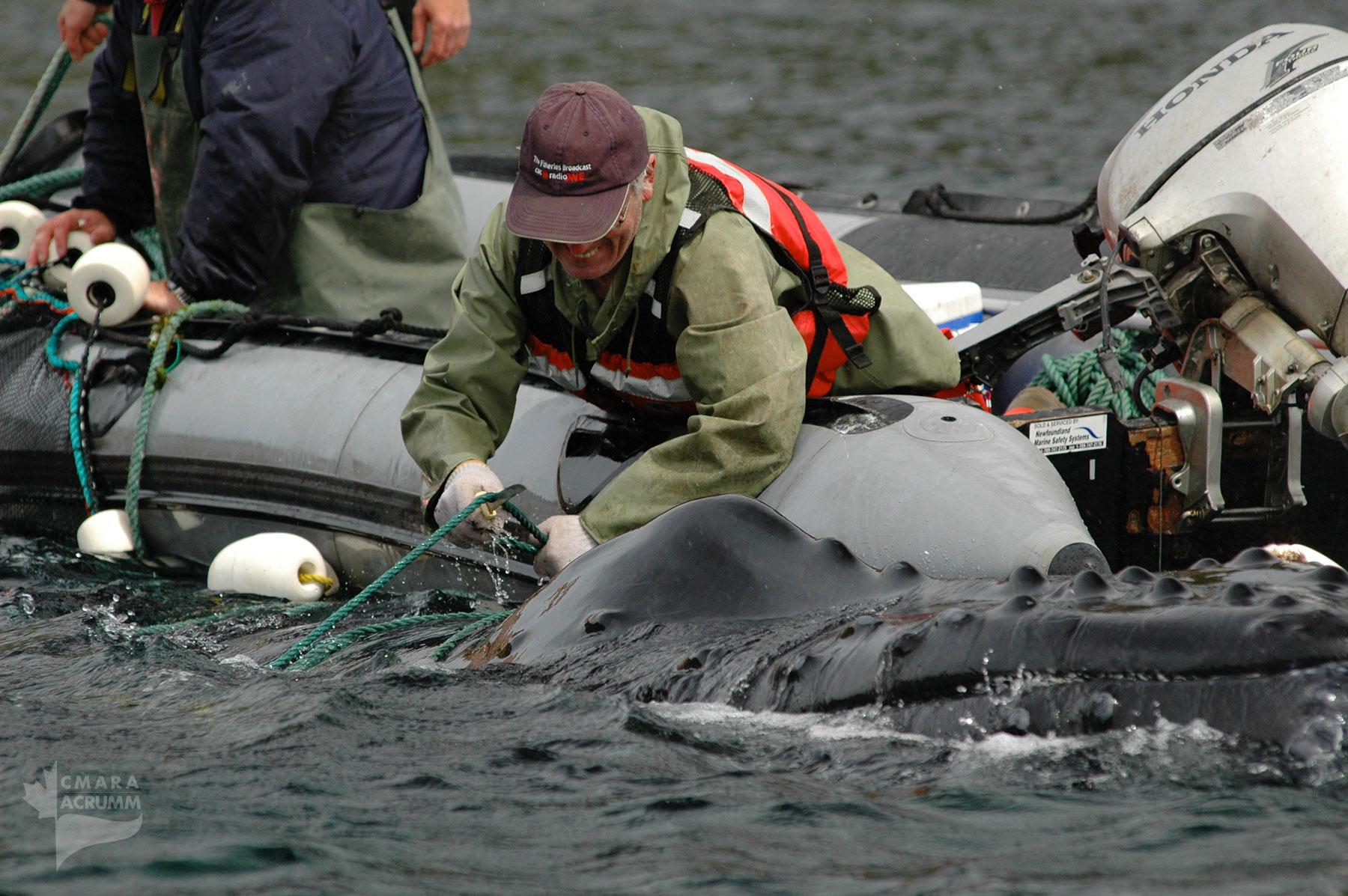 disentangling marine animal wrs cmara