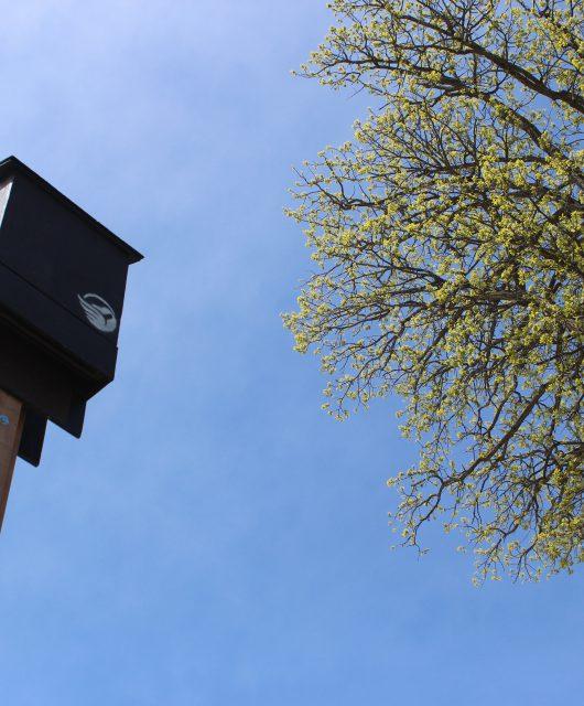 CWF bat house