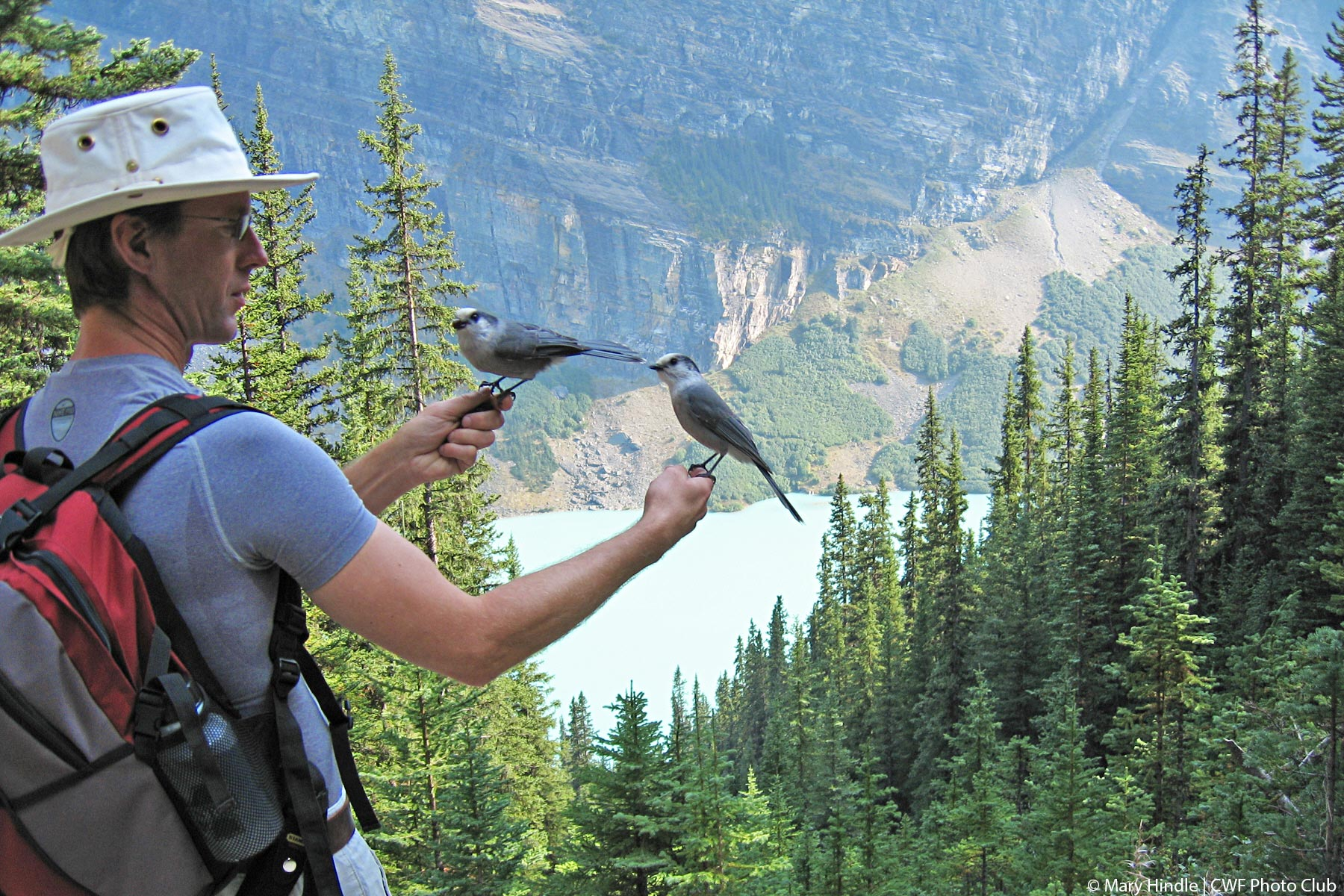 Connecting with gray jays in Banff National Park @Mary Hindle   CWF Photo Club