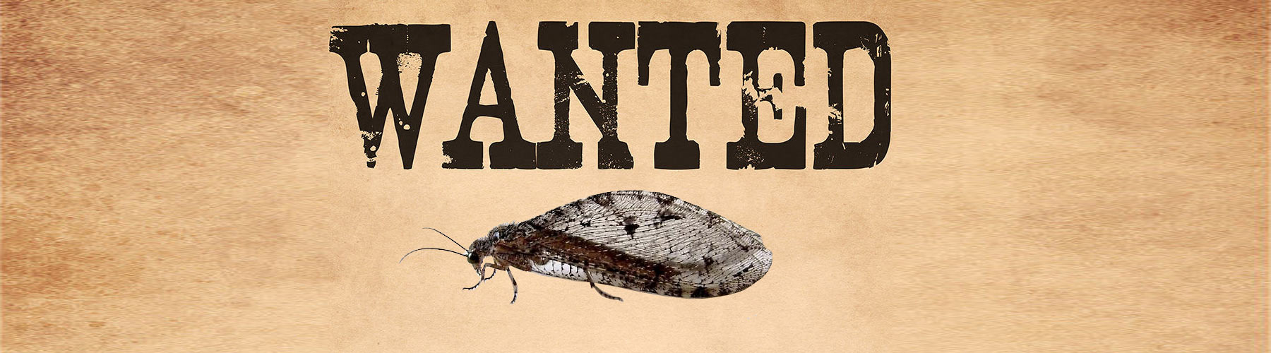 WANTED: Giant Lacewing! Report to iNaturalist on Your Nearest Device