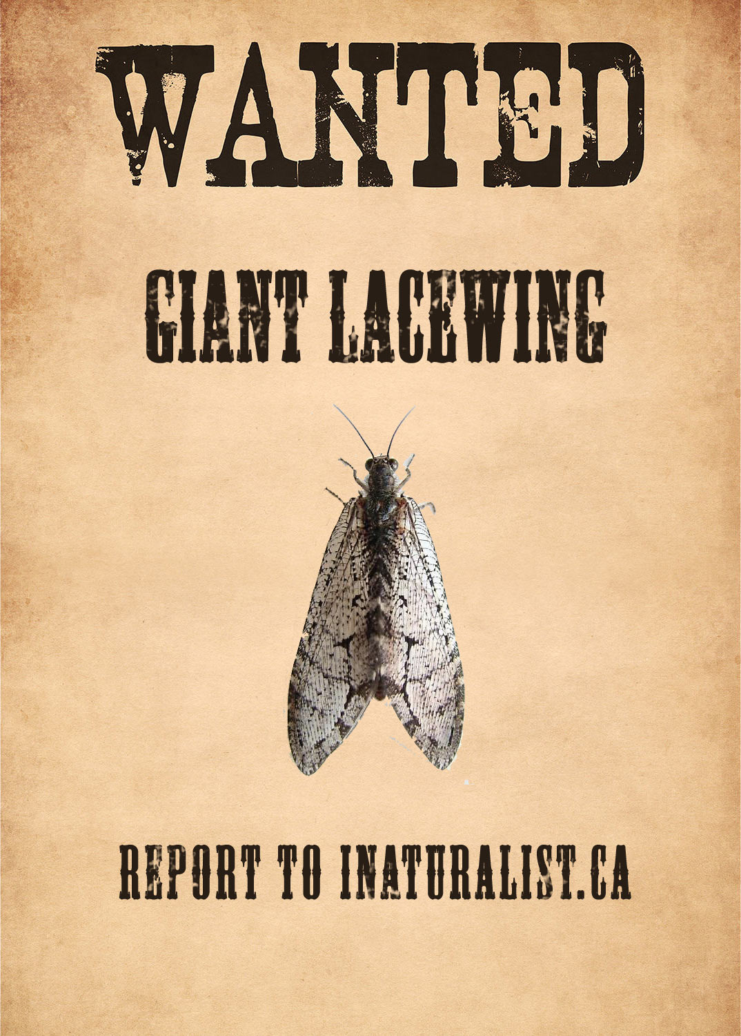 Giant lacewing wanted poster