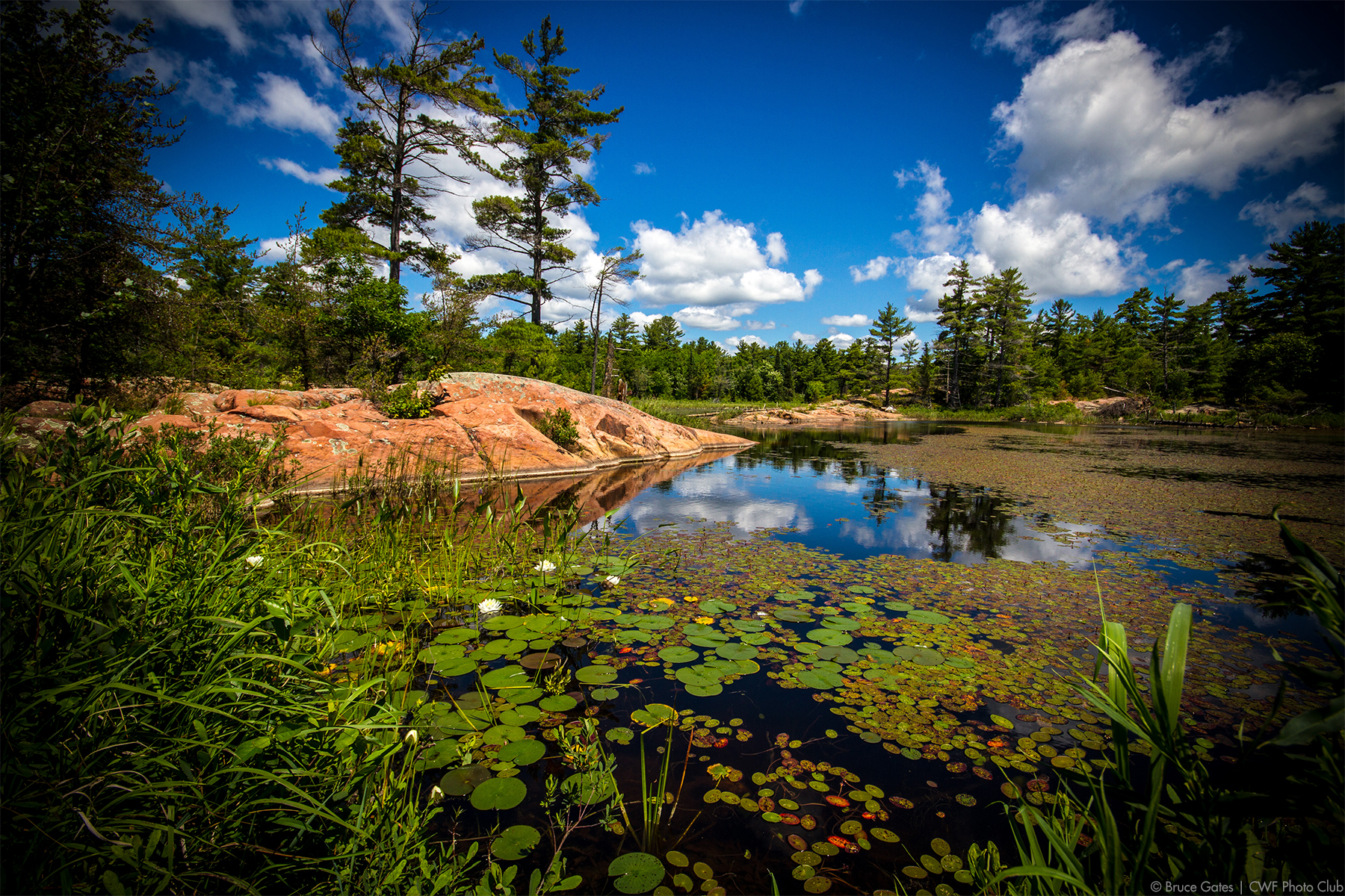 Playing on Your Phone Can Help Conserve Wetlands