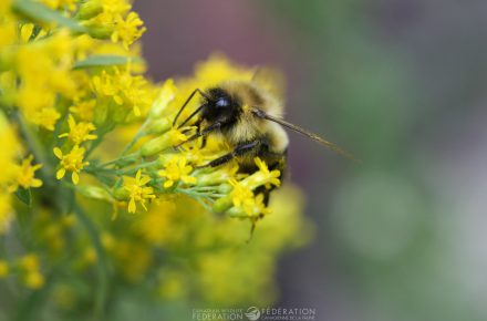 If you have space and are able to let goldenrod grow in the corner of your garden or the back of beds, they are beneficial to many pollinators.